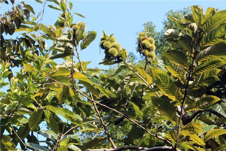 果树不适宜栽种在哪些地方?