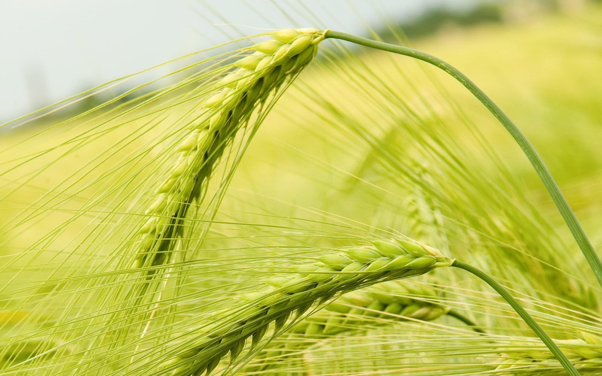 农作物喷施叶面肥的好处,你知道吗?