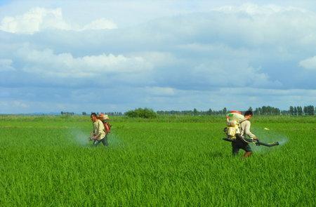叶面施肥技术与叶面肥的应用