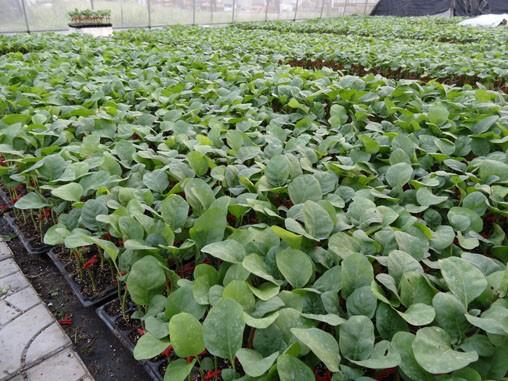 水溶肥叶面肥的正确使用方法和浓度