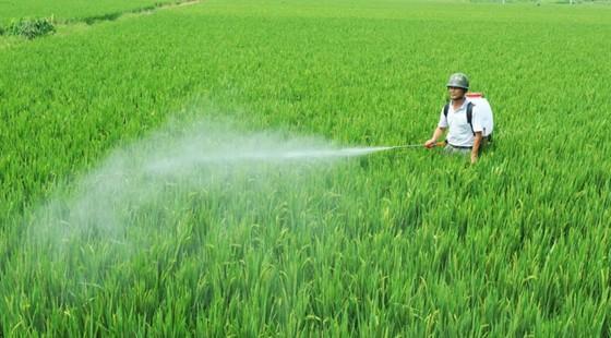 叶面肥与农药搭配时候要注意