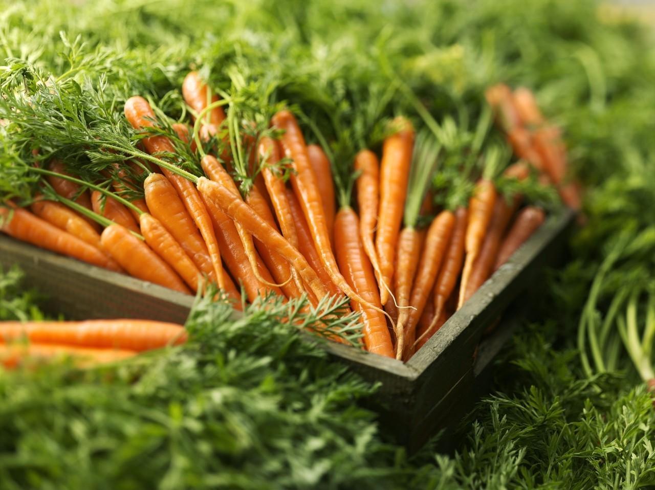 如何区分使用叶面肥