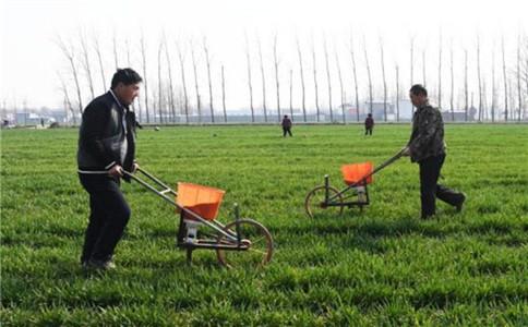 春节小麦追肥选大颗粒还是小颗粒尿素好?