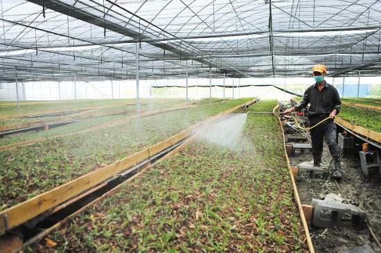 植物生长调节剂使用五要点