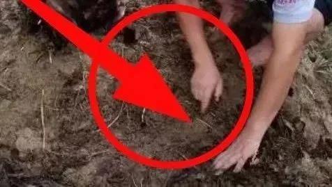 """没有""""有机质""""的土壤,种啥都长不好!为啥这么说?看完就明白了!"""