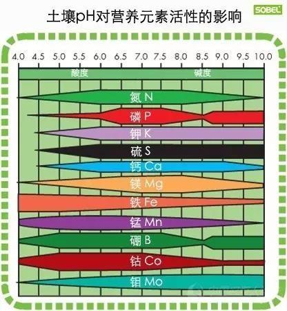 土壤酸堿度失衡有多可怕!你知道嗎?