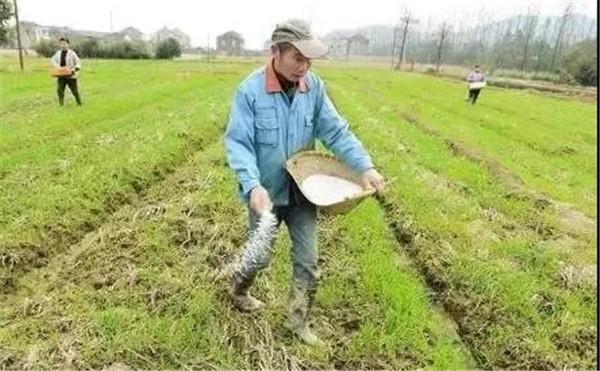 肥料不能胡亂混施,不然會出大問題!今年別再犯這些錯了!