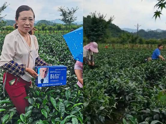 茶叶水溶肥反馈图